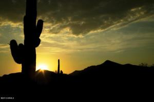 Desert Mountain Saguaro sunset